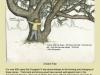 11ancient-tree